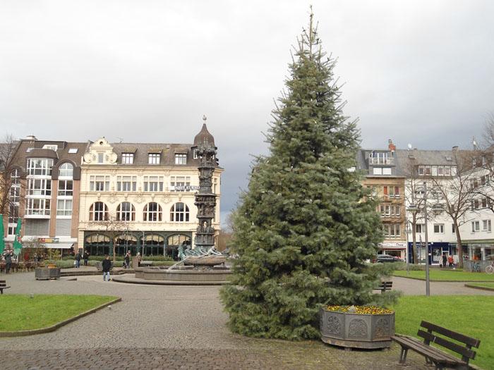 Weihnachtsbäume gesucht