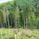 """Die Forstreviere Bendorf und Vallendar informieren über das Thema """"Unser Wald im Klimawandel""""."""