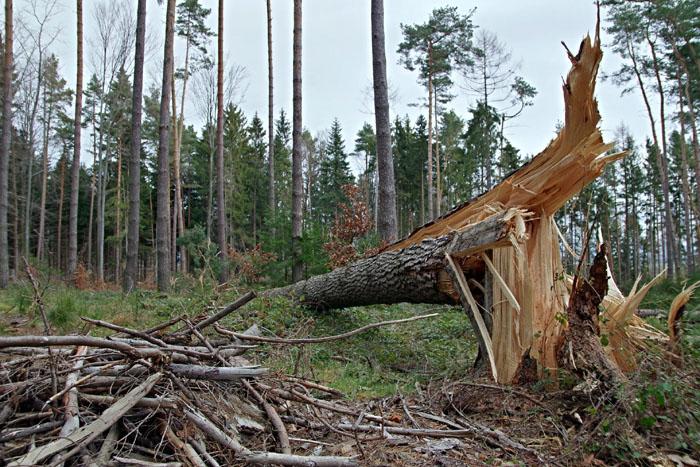 Auch die Wanderwege leiden mit dem Wald