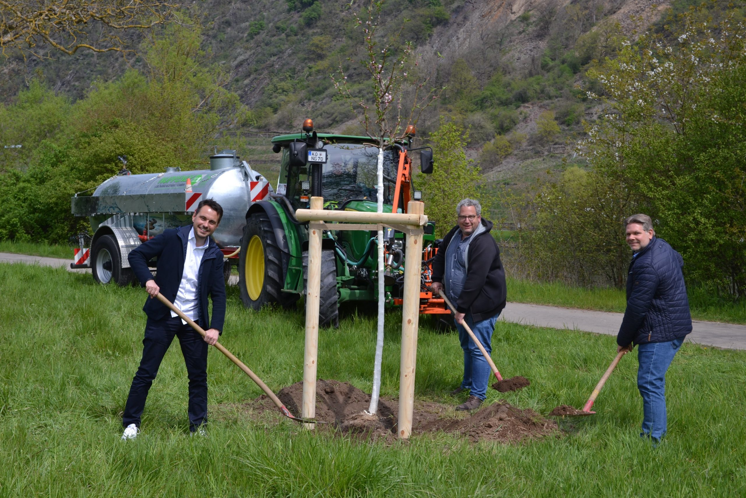 Vier Weinbergpfirsich-Bäume am Moselbogen gepflanzt