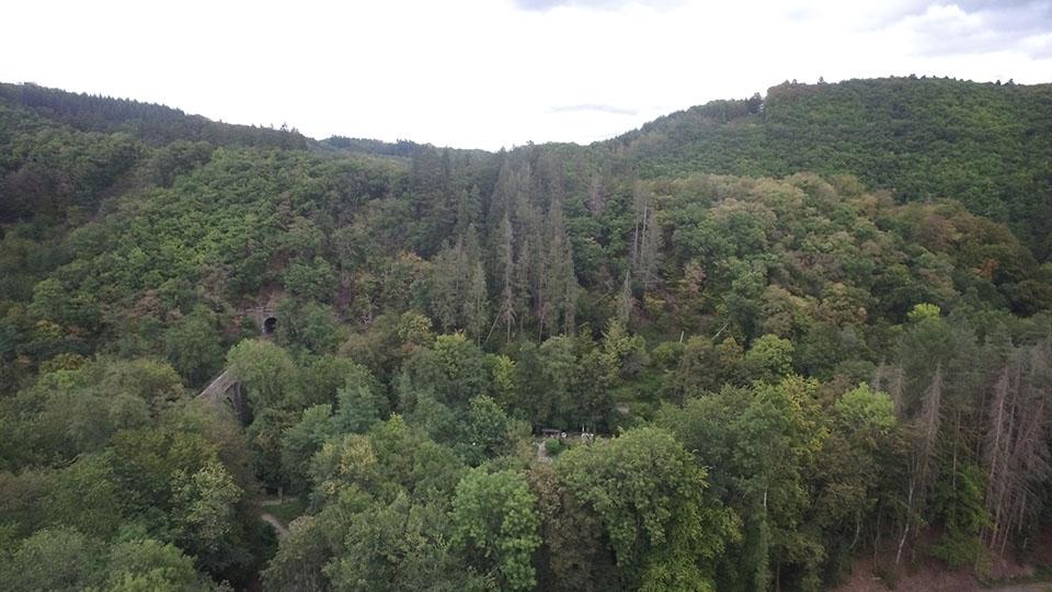 Für eine nachhaltige Waldbewirtschaftung