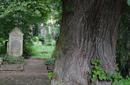 Entschleunigung: Auf dem Alten Friedhof alle Sinne schärfen