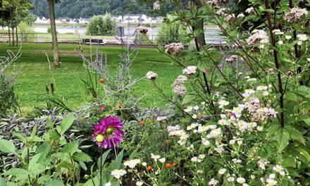Blumenbeet neu gestaltet
