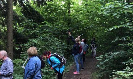 Benefiz-Aktion zu Gunsten der bundesweiten Vereine der Schutzgemeinschaft Deutscher Wald (SDW) – Waldbaden zur Sommersonnenwende am 21. Juni 2021