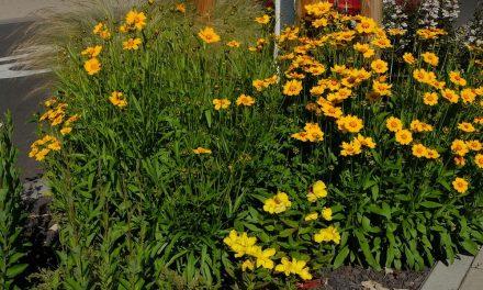 Bürger gestalten Bienenbeet am Carmen-Sylva-Garten – Stadt Neuwied schafft weiteren Lebensraum für Insekten